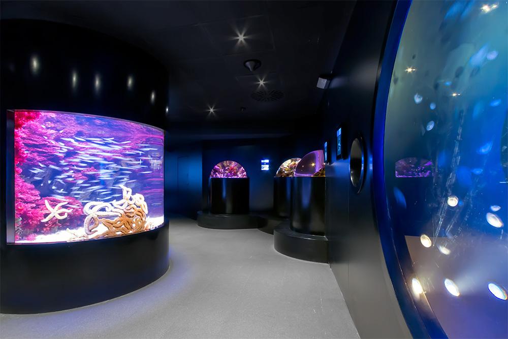 proyecto_aquarium_01