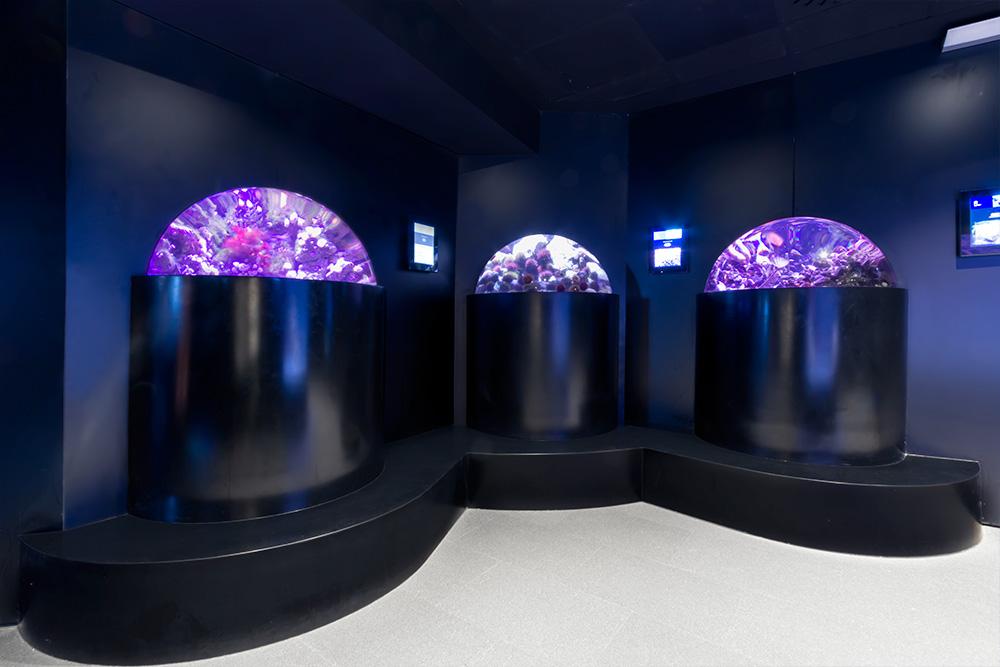 proyecto_aquarium_02